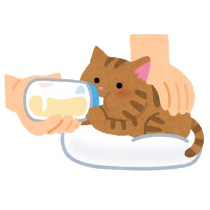"""【聖人】カラスに襲われていた子猫を助けたら…意外すぎる形の""""恩返し""""がきたwww"""
