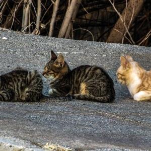 """駐車場に佇むネコが""""連続写真""""みたいになってた…😂"""