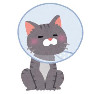 「やだ欲しい」…今まであまりに画一的だった『猫用エリザベスカラー』業界を震撼させる商品が発見されるw