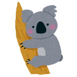 【動画】人に懐かないはずのコアラが、40度を超える暑さでついに…🐨