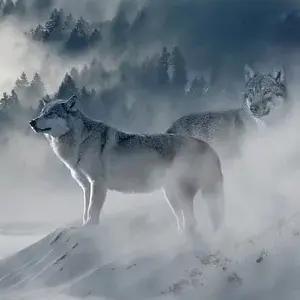 """「これは酷い…」ネット通販で見かけた""""狼っぽいファーコート""""を注文した結果😂"""