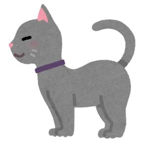 【驚愕】「雑種かと思っていたら…」RPG主人公の出自のような猫がいたwww