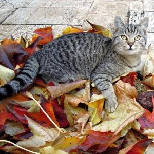 「どれだけ暴れてきたんだw」…猫さんが衝撃的な姿で外から帰還してきた😹