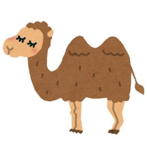 「初めて見た…」生まれたばかりのラクダはこんな風貌だった😳