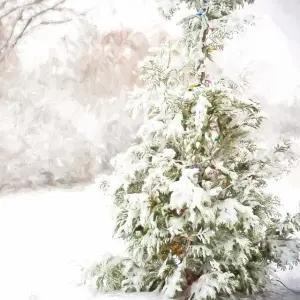 【衝撃】福島・青森間を走る『奥羽本線』、冬の車内風景が地獄すぎる…😱