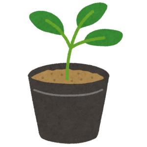 【驚愕】100円ショップで買った植物を1年間大事に育てた結果…😳