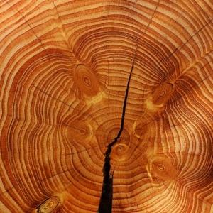 """年輪からわかる木の""""生き様""""。識者による解説が分かりやすいと話題に"""