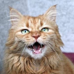 【悲報】飼い猫が助けを求めるような鳴き声を発していたので見てみたら…とんでもない状態になっていた🙀