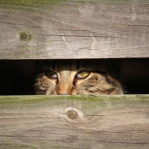 台所からガサゴソ音がしたので見に行ったら…猫が最高の隠れ場所を発見していた😂