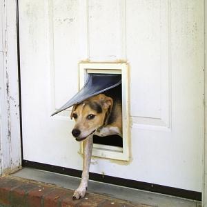 【動画】自宅の網戸に「犬用の出入り口」を設置した結果www
