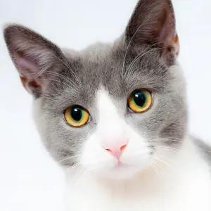 ツイ民「ネコが絶対に目線をくれるスマホ用アタッチメント作った」→天才的すぎると話題に😂