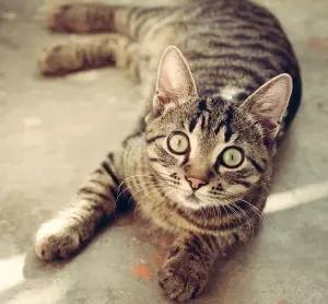 """【動画】飼い主がプレイするモンハンを見て""""狩猟本能""""に目覚めた猫さん、猛烈😼"""