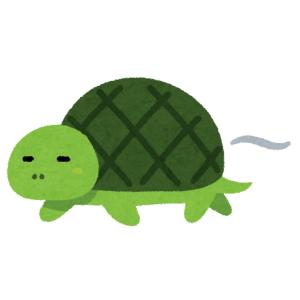 """【驚愕】甲羅の色と模様が""""アレ""""そっくり! あまりに酸っぱそうな亀が話題に"""