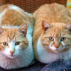 【定員2匹】猫さん、とんでもない所に潜り込んでご満悦😸