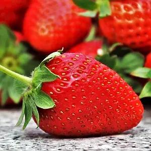 このイチゴ…完全に自分を「キュウリ」だと思い込んでやがる😂