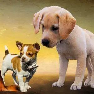"""【違和犬】あるツイ民が公開した""""あまりに合成っぽい犬""""が話題にw"""