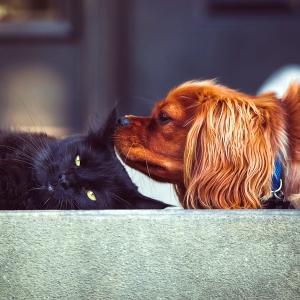 """「どうしてこうなった…」クルマの中で仲良く眠る犬と猫の""""寝相""""が大変なことに😂"""