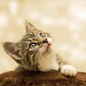 """【正解】飼い主にどうしても構ってほしい猫さんの""""賢すぎる行動""""が話題にwww"""