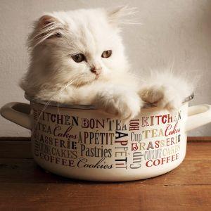 【擬態】台所に行ったら…猫が食器棚にシンデレラフィットしてた😹