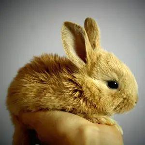 """【動画】爪切りが怖くて仕方ないウサギさん、震えで""""マッサージ機""""と化してしまう🐰"""