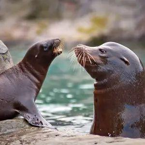 【怒濤のトド】ある水族館で行われるショーのタイムテーブルがツッコミどころ満載ww