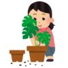 """【黄金比】室内で倒してしまった鉢植が…スゴく美しい""""模様""""を生み出していた😳"""