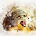 【朗報】スーパーサイヤ猫、爆誕wwwww