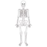 """「いくらブームだからって…」骨格標本に""""あのキャラ""""のコスプレをさせる整形外科が話題にwww"""