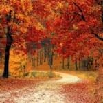 【絶景】埼玉にある『ムーミン谷』は秋の夜こそが至高だった…!