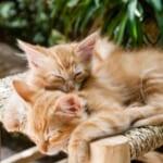 「これは尊い…」奇跡的なユニゾン状態で眠る二匹の猫さんたち😻