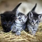 """「いったい何が始まるんだ…」田舎の雪道で猫が""""謎の行列""""を作っていた🤔"""