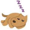 眠いけど…ご飯の時間も待ちきれない! そんなワンコが選んだ寝場所がコチラw