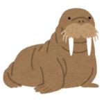 """「コロナ対策バッチリだな!」ある水族館のセイウチが最近覚えた""""しぐさ""""がカワイイと話題にwww"""