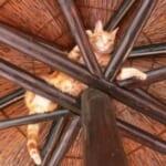 """「スタンド攻撃か!?」…あるお宅で""""とんでもない場所""""に挟まってしまった猫さんが話題に"""