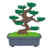 「なんという生命力…」島根の住宅街であまりに突き抜けた松の木が目撃されるwww