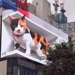 """【驚愕】北海道テレビ、今流行りの""""飛び出す猫""""をいち早く実現していたww"""