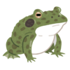 【動画】このカエルの威嚇ポーズ…ストイックすぎる😂